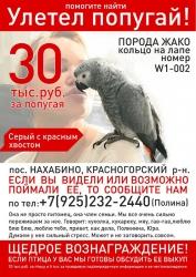 Розыск серого попугая породы жако, который улетел в Нахабино!